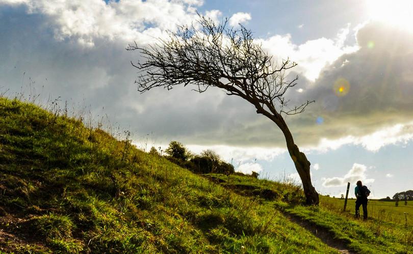 ditchling-beacon-tree-galery.jpg