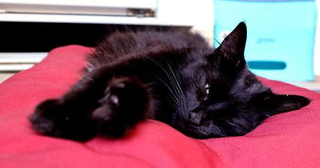 baboo_cat_yoga.jpg