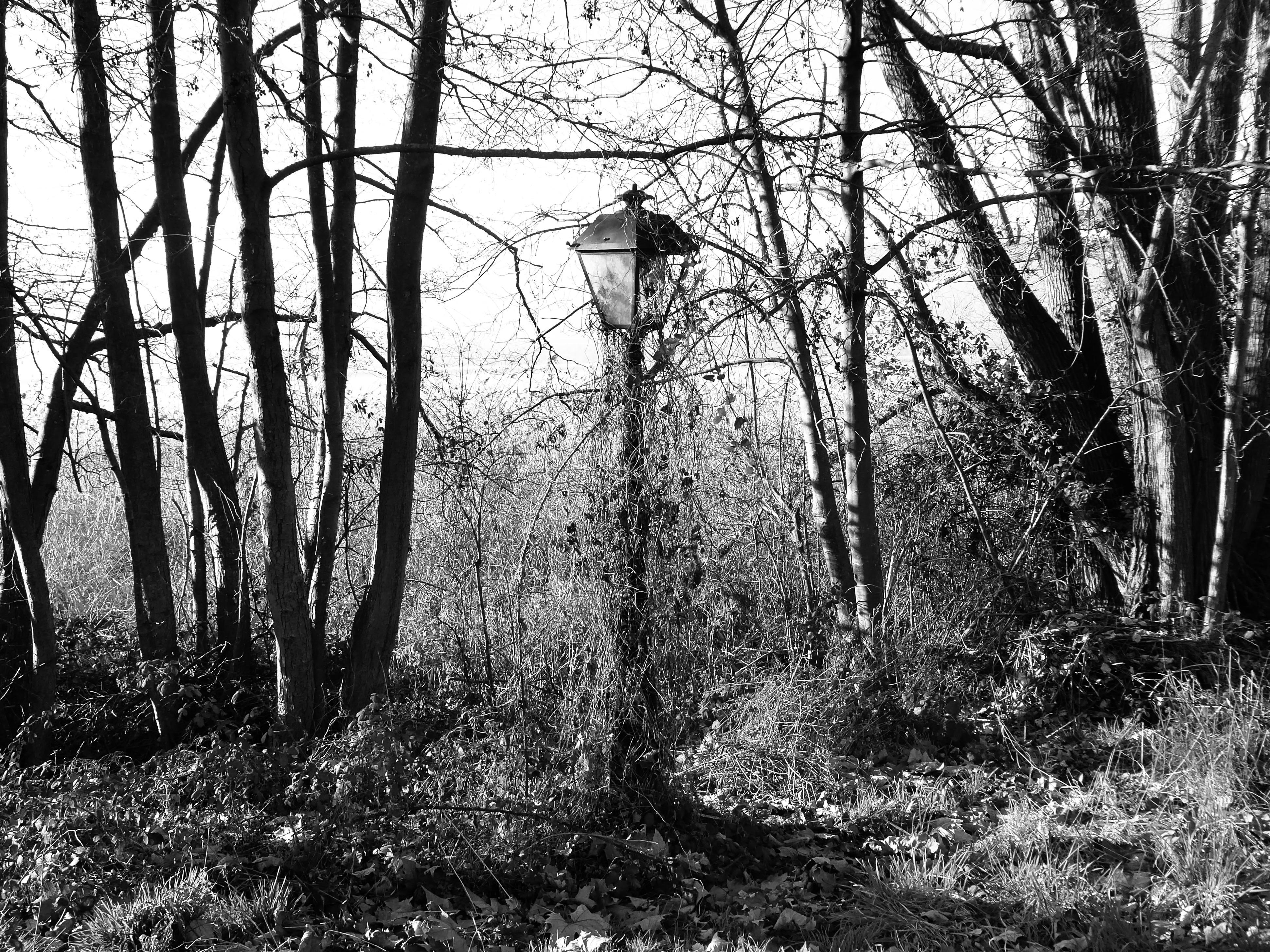 200112_chens_sur_leman