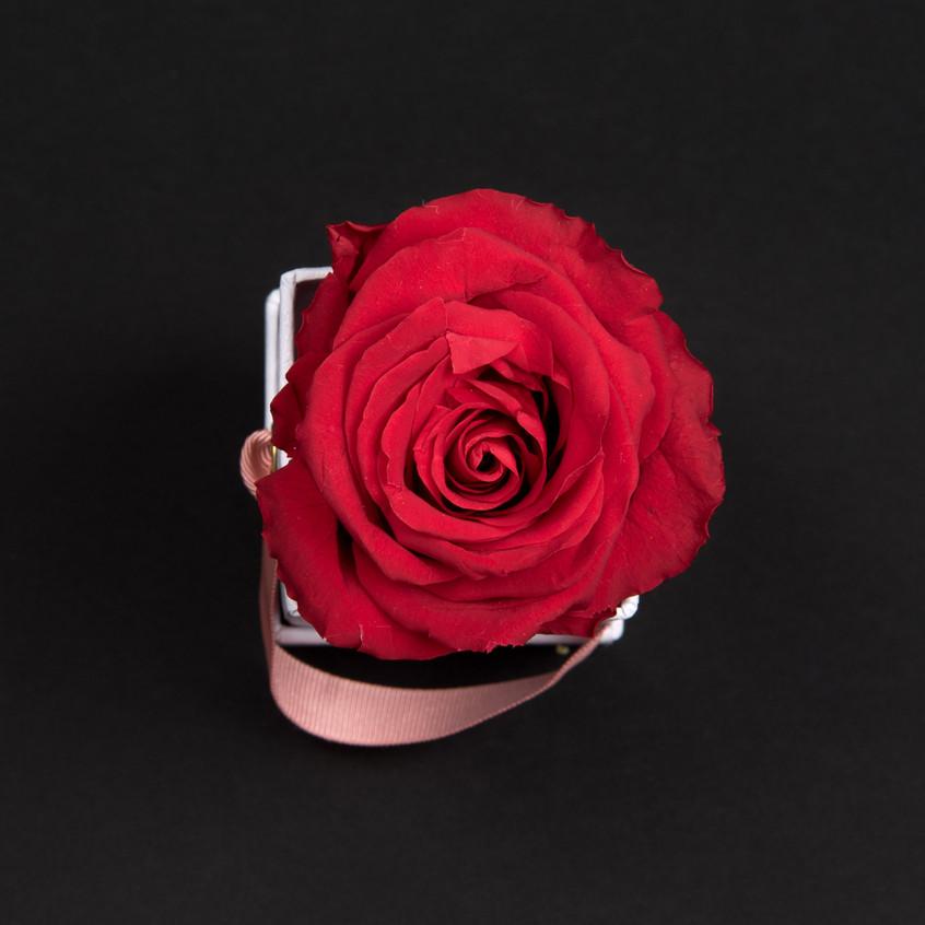 Solo-1-rose-rouge-passion-box-carrée-blanche-Atelier19-082