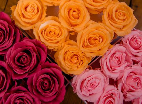 Roses éternelles : des fleurs préservées ou stabilisées pour des atouts indéniables