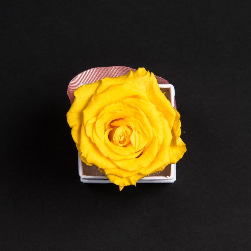 Solo-1-rose-jaune-d'or-box-carrée-blanche-Atelier19-087