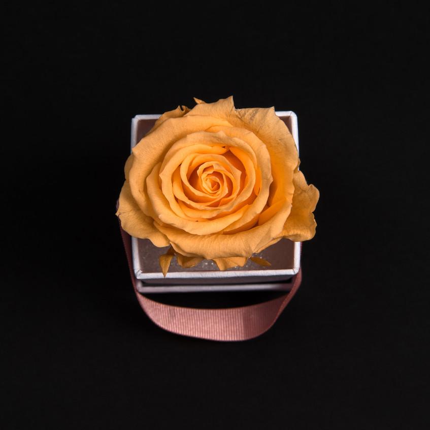 Solo-1-rose-pêche-velouté-box-carrée-blanche-Atelier19-081