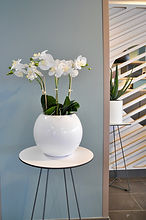 Belles plantes artificielles, fleurs en tissu et plastique - deco sens