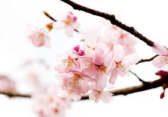 deco sens - Vente et location de fleurs et plantes artificielles parfumées