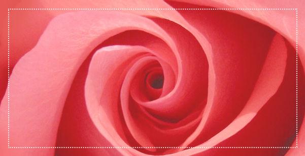 Roses éternelles – Atelier 19