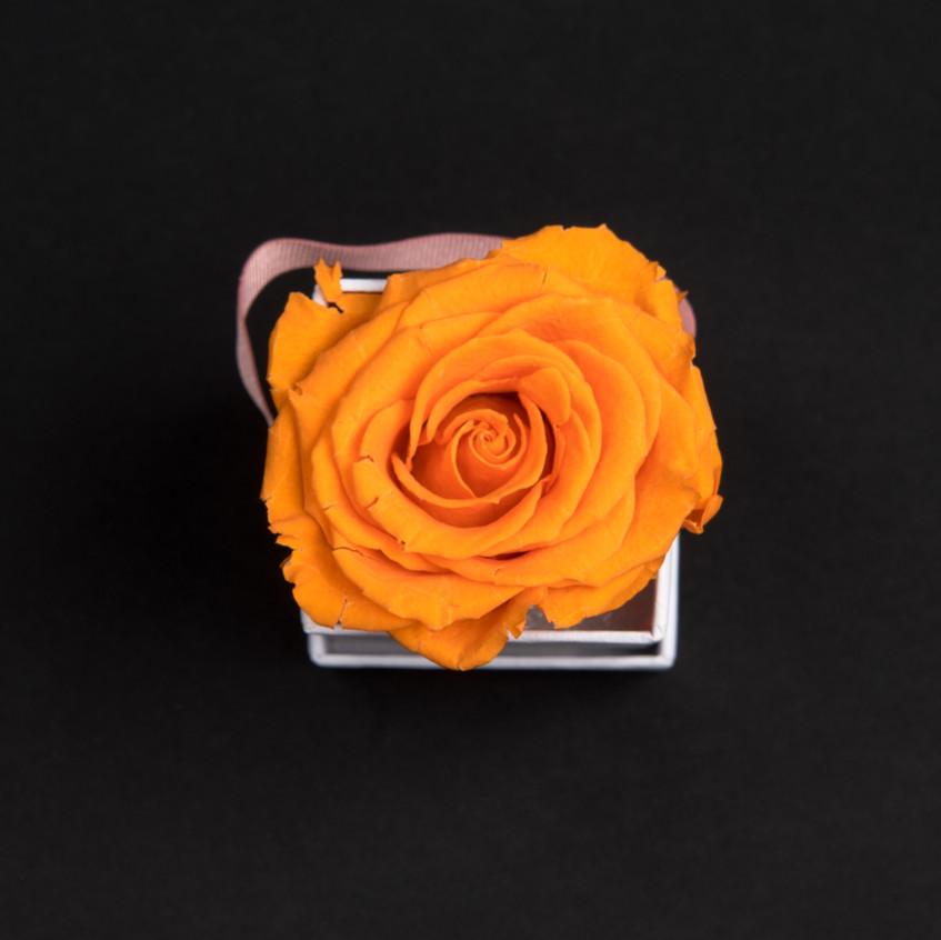 Solo-1-rose-orange-vibrant-box-carrée-blanche-Atelier19-084