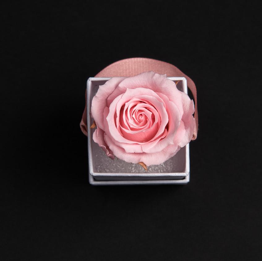 Solo-1-rose-rose-tendre-box-carrée-blanche-Atelier19-086