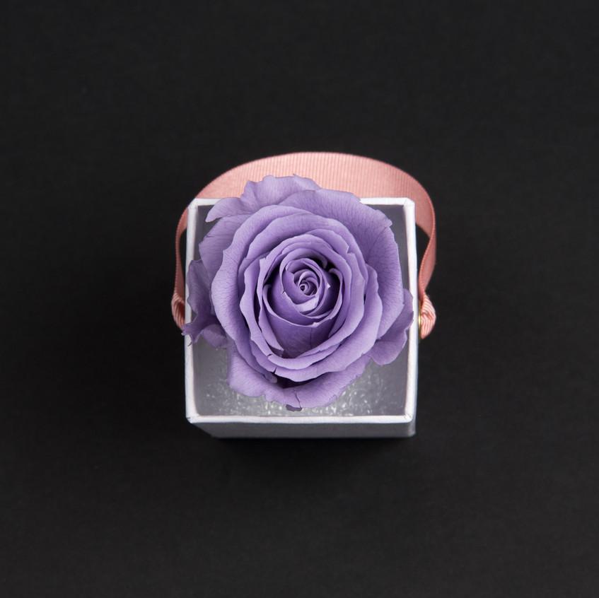 Solo-1-rose-parme-doux-box-carrée-blanche-Atelier19-085