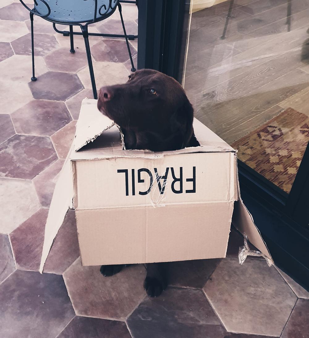 My dog in Barcelona illustrates lockdown frustration