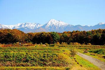紅葉と水田と八ヶ岳.jpg
