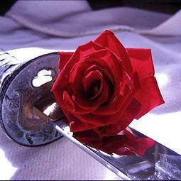 AKBAN Rose.jpg