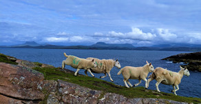 Adventures AlongtheNC500 and Beyond – Ullapool to Loch Ewe