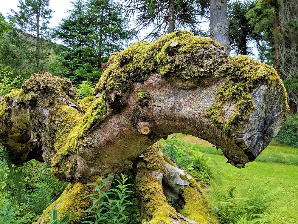 Leckmelm Shrubbery & Arboretum, Ullapool, Scotland