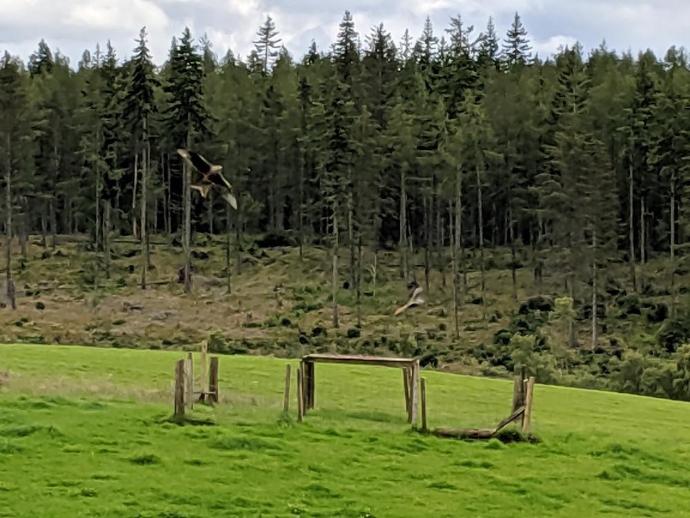 RSPBTollieRed Kites Natural Reserve, Scotland