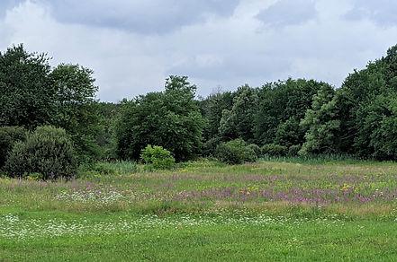 Meadow flowers edit IMG_20200804_131035.