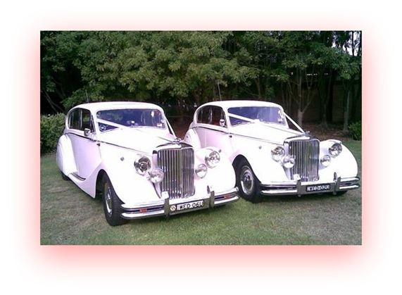 1950 Mark V Jaguar's