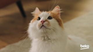 Beko - Best Mates Together / The Cat