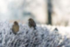 Ptaki na trawie mrożonej