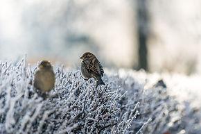 냉동 잔디에 새들이