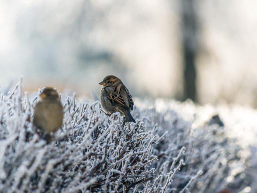 Feeding wild garden birds