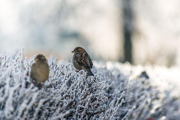 Pássaros na grama congelada