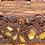 Thumbnail: Emma's MEGA Chocolate Walnut BROWNIE