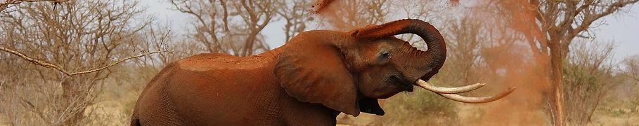 elephant-111695_1280.jpg