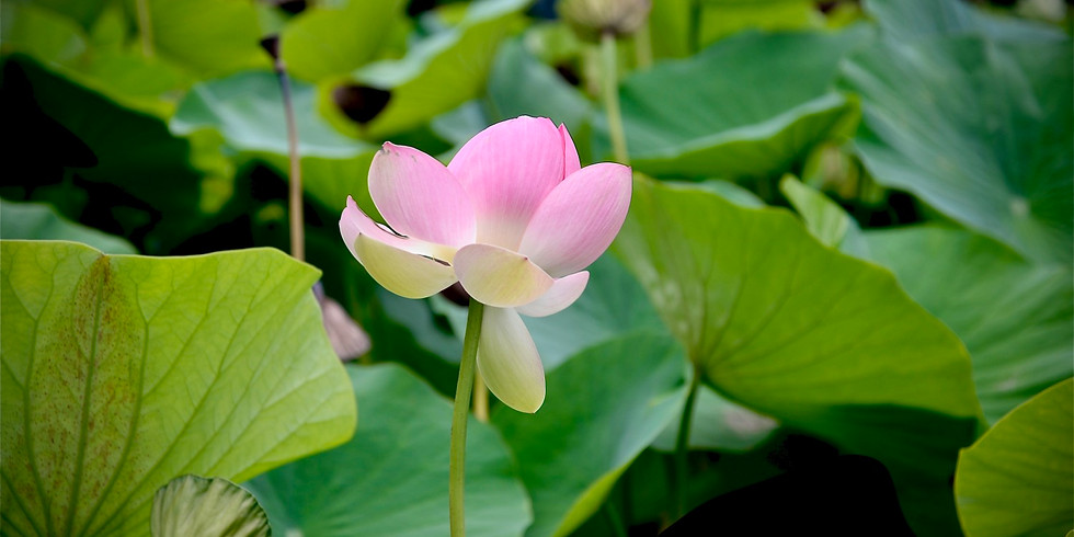 Botanic Gardens Inspiration
