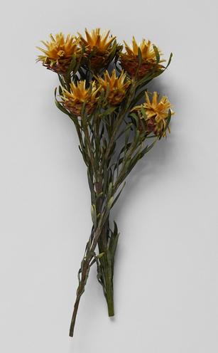 dried botanicals
