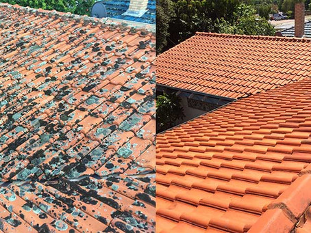 How Professional Roof Cleaning Can Save You Money