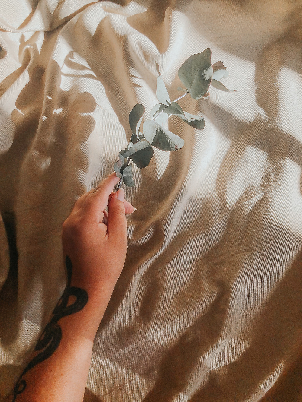 Mão com tatuagem de cobra segurando um ramo de eucalipto.