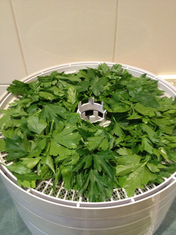 Dehydrating herbs