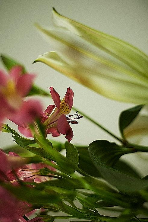 Flores_OS.jpg
