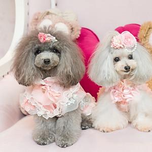 Cutie & Clover