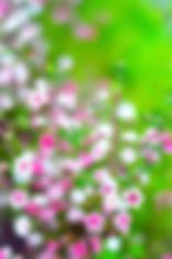 DLC46.jpg