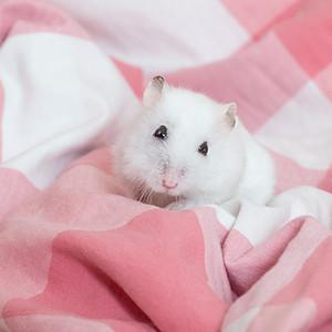 哥哥 - hamster photography