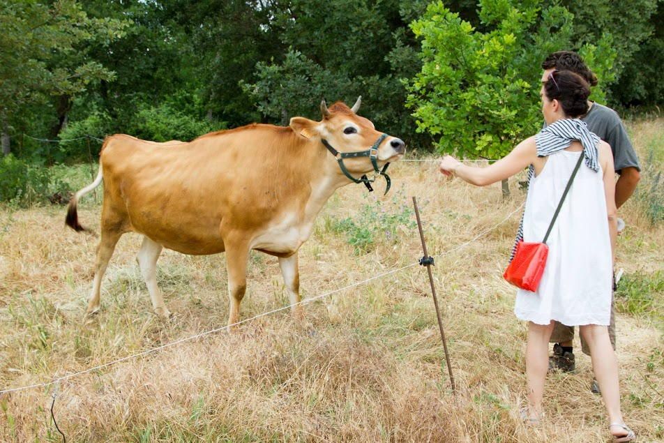 vache + couple
