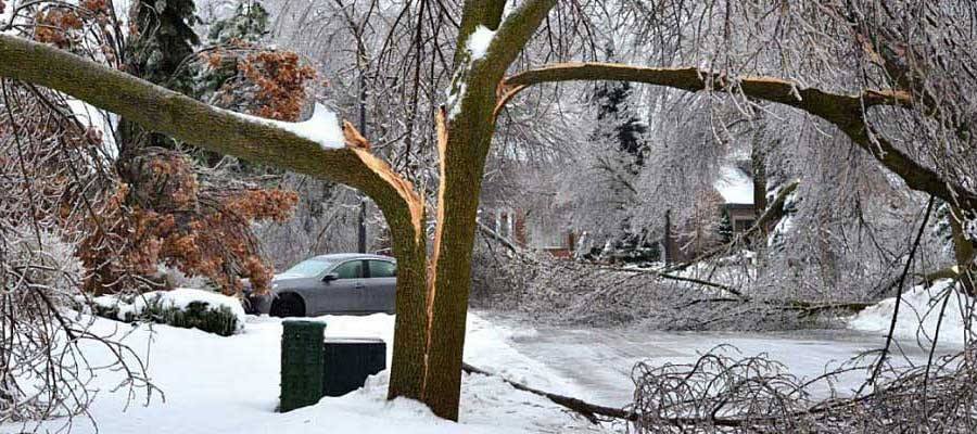 How can a homeowner tell if a tree is safe enough to keep?