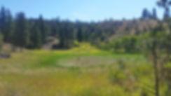 ephemeral wetland (dry).jpg