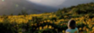okanagan balsamroot sunflower