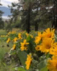 Askinner landscape-2.jpg