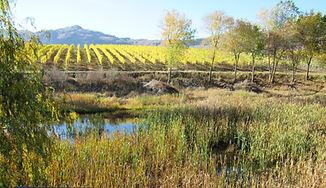 wetland vineyard sustainable agriculture