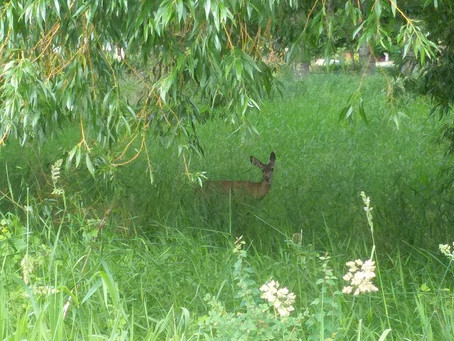 Out in the Field with our Summer Students: A Wildlife Encounter