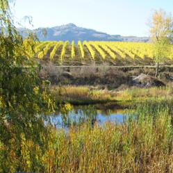 wetland in ag osss photo.JPG