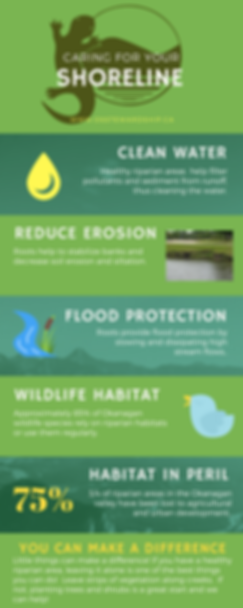 Caring for Your Shoreline Infographic.pn