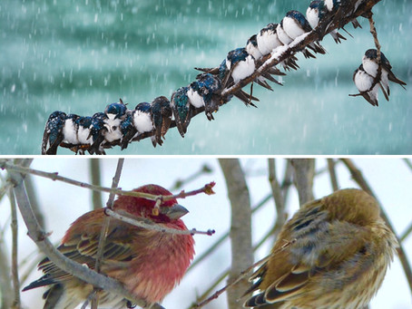 Wintery Brrrr-ds