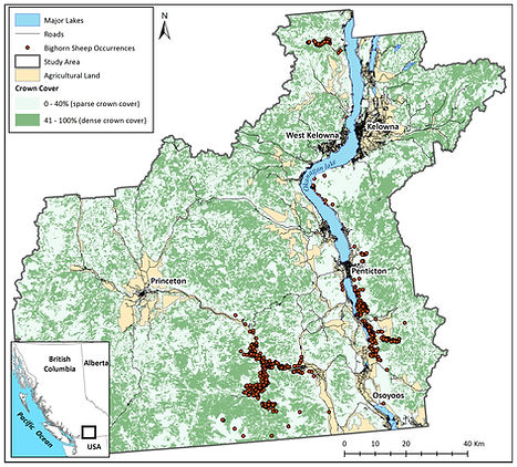 bighorn sheep distribution map.jpg