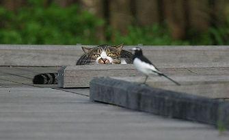 cathuntingbirds.jpg