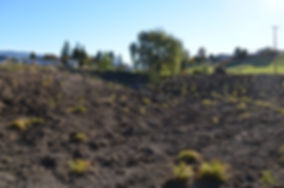 Radies excavation00063.JPG